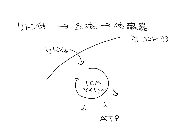ケトン体5.jpg